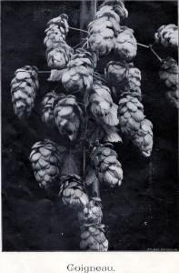 historische hop